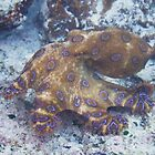 Blue ringed octopus by kirribas30