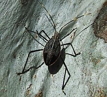 Stink Bug by kirribas30