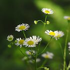 Woodland Wildflowers by Nicole DeFord