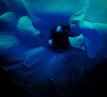 Blue Flower. by Vitta