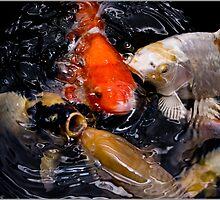 koi karp fish by dsum87