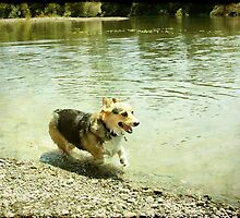 A frolic in the river by Anne  McGinn
