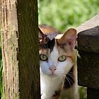Calico Feral Cat At Feeding by Pagani