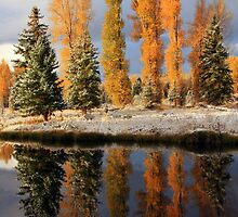 Cottonwood Reflection by David Kocherhans
