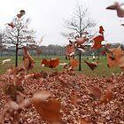 Autumn leaves by PetraJW