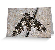 Rustic Sphinx Moth  Greeting Card