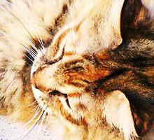 The Lion Sleeps Tonight by Thomas Stevens