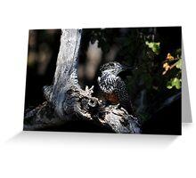 Giant Kingfisher - Zambezi River Greeting Card