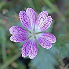 Delicate purple blossom by StitchingDreams