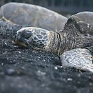 Endangered Hawaiian Turtle by Randy Richards