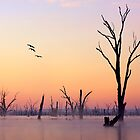 A new day - Lake Mulwala by Hans Kawitzki