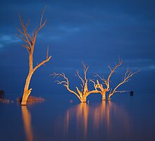 Evening Light | NSW by Ben Messina
