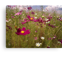 Crawling among the Cosmos Canvas Print