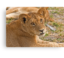 I am small but ...fearless Canvas Print