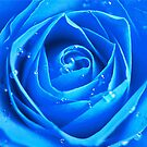 Blue Rose by PinkK