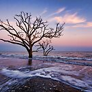 Trees at Sunset In Surf-Botany Bay by Donna Eaton