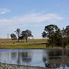 Country Pond by reflector