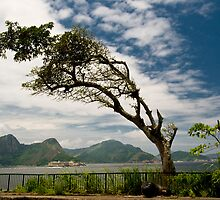 Coast Tree by Quasebart