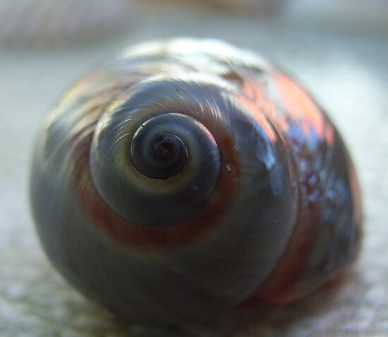 Snail shell by valandsnake