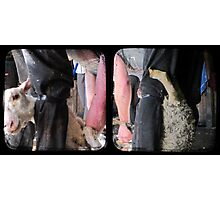 Click Go The Shears - TTV Diptych Photographic Print