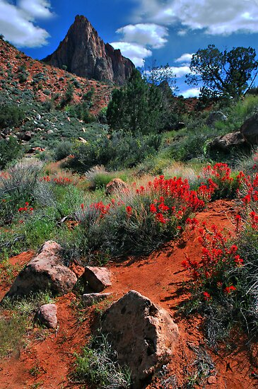 Trail to the Watchman by Barbara Manis