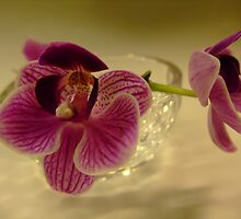 Phalaenopsis blossoms by Cheung King-man