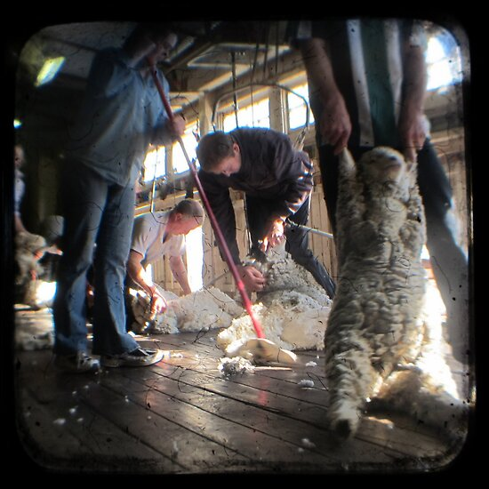 All Systems Go in the Deeargee Woolshed - TTV by Kitsmumma