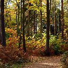 An Autumnal Sherwood Forest by saxonfenken