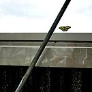Butterfly and Metal, 2 by Kevin Miller