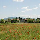 Poppy Field and Farm Buildings  by jojobob