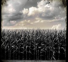 Corn by Robert Baker