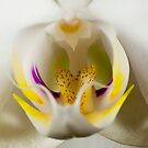 Orchidaceously Close by DonDavisUK