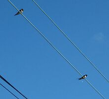 wire birds by millymuso