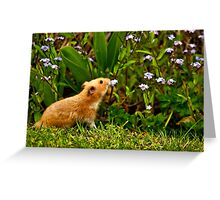 SMELLING THE ROSES Greeting Card
