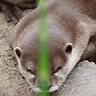 River Otter by russiannut