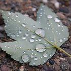 Rain Drops by PhotosByTraci