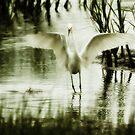 Egret by KatsEyePhoto