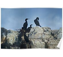 A Family of Cormorants..... Poster