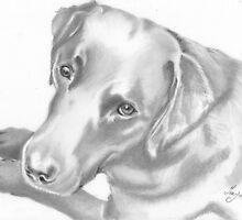 black labrador in pencil by tracymck