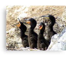 Day with the Cormorants  Canvas Print