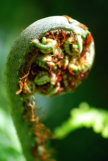 Fiddlehead by Jason Weigner