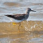 Lesser Yellowlegs by Gerry Danen