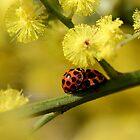 Love Bugs by yolanda