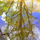 Tree Reflection by Sally J Hunter