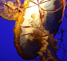 Jellyfish by Paulette1021
