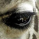 Giraffe-Eye by venny