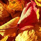 warm is the color of my heart... by Kristin Reynolds