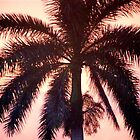 Sunset Palm by Christine Sullivan
