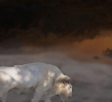 Pte Sa Win (White Buffalo Woman) by Oitancan Zephier