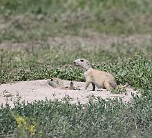 The Youth of a South Dakota Prairie Dog by Oitancan Zephier